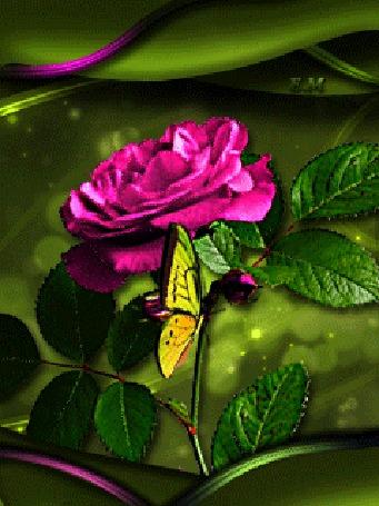 Анимация Бабочка сидит на розе (© Eclipse Moon), добавлено: 05.04.2016 23:58