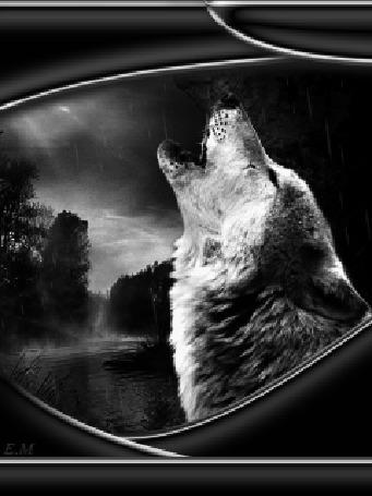 Анимация Волк воет у реки в дождь