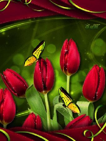 Анимация Красные тюльпаны на которых сидят бабочки