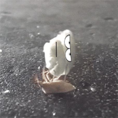 Анимация Жук вращает скучающий кусочек ваты, перебирая лапками