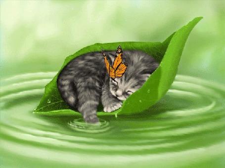 Анимация Полосатый котенок спит на зеленом листочке, плывущем по воде