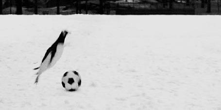 Анимация Два пингвина играют в футбол на снегу