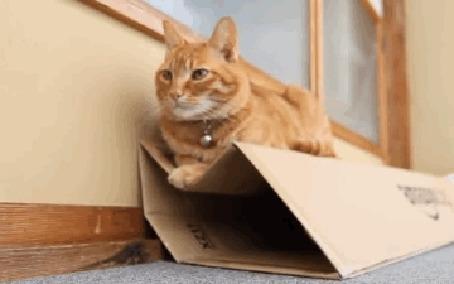 Анимация Рыжий кот лежит на коробке, которая не выдерживает его веса