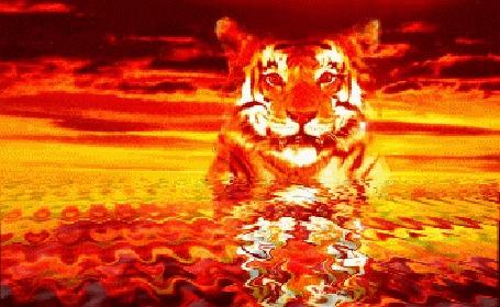 Анимация Тигр выходит из воды в огненном закате