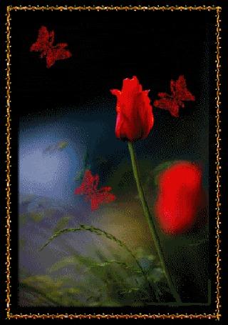Анимация Красные тюльпаны с летающими красными бабочками на черном фоне
