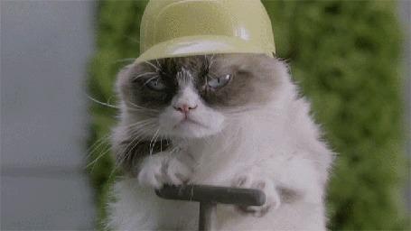 Анимация Сердитый Котик / Grumpy Cat взрывает особняк