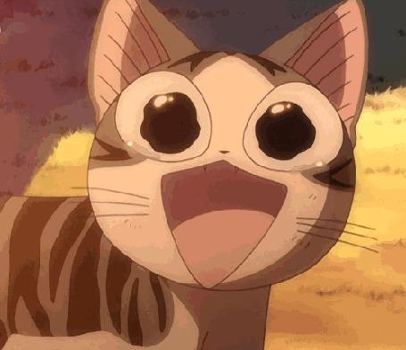 Анимация Плачущий котенок с открытым ртом