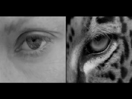 Анимация Глаз человека и леопарда одновременно моргают