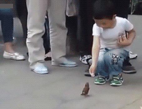 Анимация Мальчик дает монетку воробью, а тот опускает ее в свинью-копилку