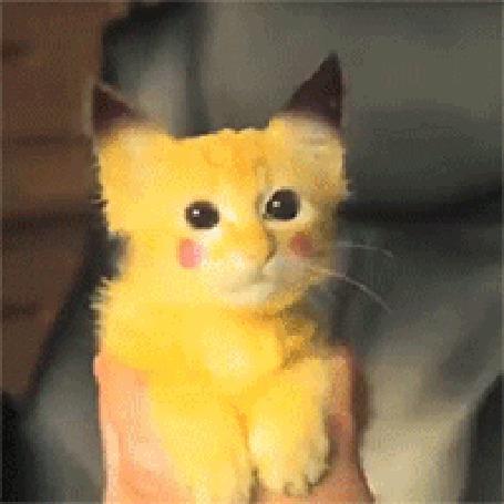 Анимация Рыжий кот, который так похож на Пикачу, силой магии далеко отбрасывает парня, который решил его погладить