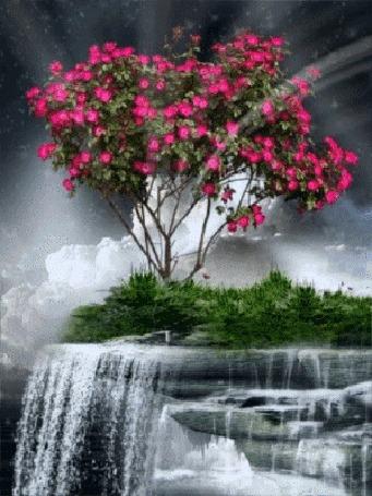 Анимация Цветущее дерево стоит у водопада (© zmeiy), добавлено: 27.04.2016 17:46