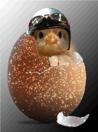 Анимация Цыпленок вылупился из золотого яйца, на голове каска и солнечные очки