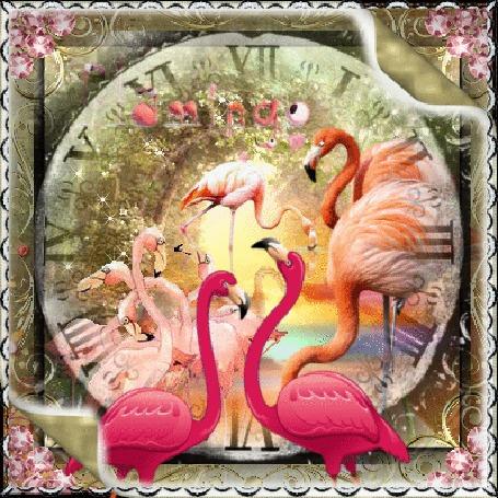 Анимация Розовые фламинго на фоне часов
