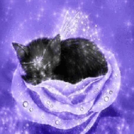 Анимация Котик спит в розе
