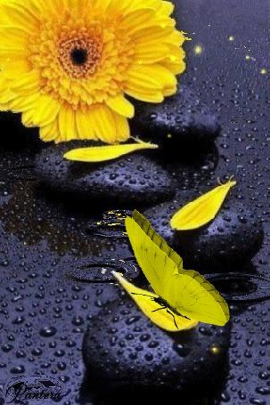 Анимация Бабочка сидит на камне во время дождя, рядом лежит цветок желтой герберы