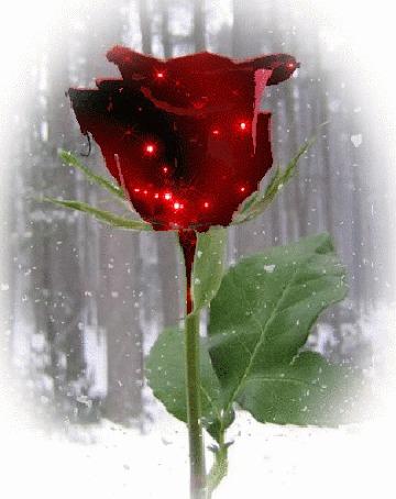 Анимация Блестящая роза в снегу