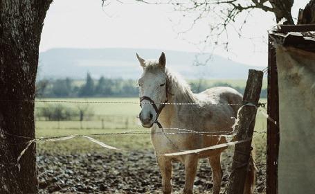 Анимация Белая лошадь за забором