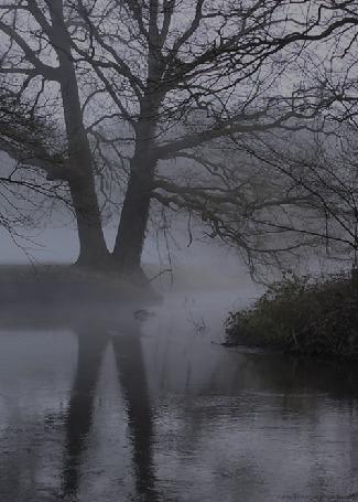 Анимация Туман над рекой, окруженной деревьями (© Seona), добавлено: 15.05.2016 15:44