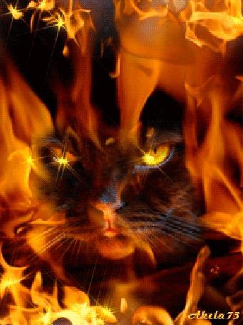Анимация Мордочка черной кошки с желтыми глазами, в клубах дыма и языках желтого пламени, автор Akela 73