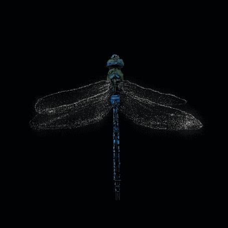 Анимация Полет синей стрекозы на черном фоне