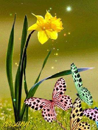 Анимация Желтый нарцисс, мимо которого пролетают бабочки