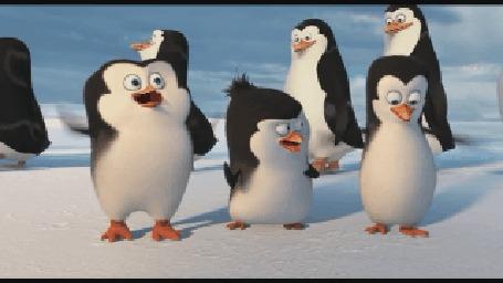 Анимация Маленькие пингвины — Шкипер, Ковальски и Рико радостно подпрыгивают, мультфильм Пингвины Мадагаскара (© Anatol), добавлено: 24.05.2016 15:18
