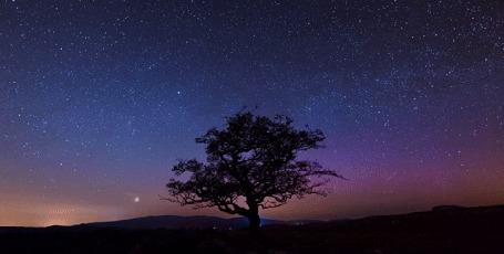 Анимация Одинокое дерево на фоне звездного неба