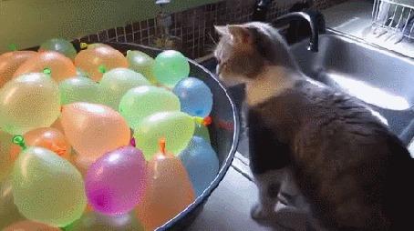 Анимация Котенок пугается воздушных шариков