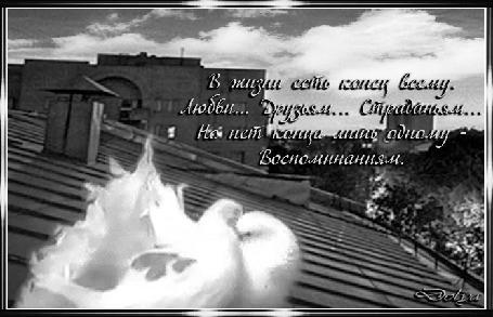 Анимация Голуби целуются на крыше (В жизни есть конец всему. Любви. Друзьям… Страданьям… Но нет конца лишь одному - Воспоминаниям.)