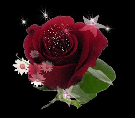 Анимация Сияющая бордовая роза