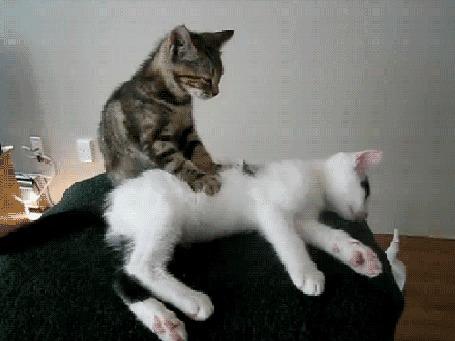 Анимация Кошка делает массаж