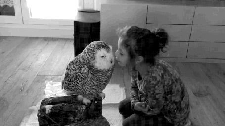 Анимация Девочка целует сову (© zmeiy), добавлено: 02.06.2016 15:22