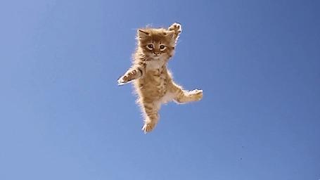 Анимация Рыжий котенок летит и падает прямо девушке в кофточку