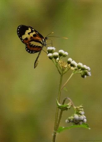 Анимация Бабочка сидит на цветке