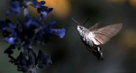 Анимация Порхающий мотылек у цветка