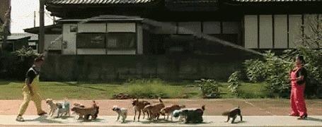 Анимация Собаки перепрыгивают через скакалку (© Anatol), добавлено: 05.06.2016 14:29