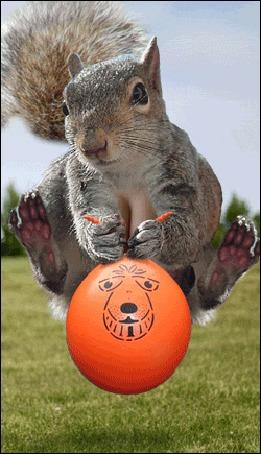 Анимация Белка подпрыгивает на оранжевом мячике