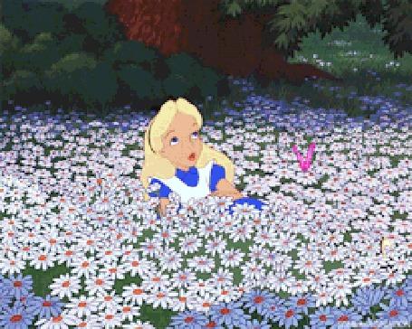 Анимация Алиса в поле ромашек
