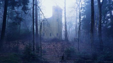 Анимация Руины старого замка посреди леса в утреннем тумане