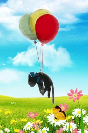 Анимация Черный котенок, привязанный к воздушным шарикам, парит над зеленым лугом с цветами