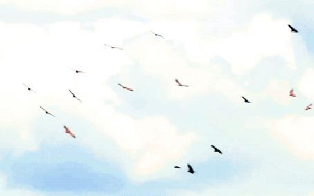 Анимация Птицы, парящие в небе (© Freshness), добавлено: 11.06.2016 21:00