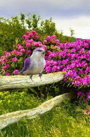Анимация Птица сидит на бревнышке-заборе у цветущего куста (© zmeiy), добавлено: 13.06.2016 07:25