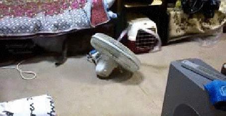 Анимация Кошка играет с ленточкой, которая развевается от потока воздуха из вентилятора