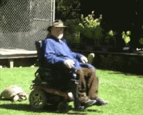Анимация Черепаха пытается догнать тень от коляски, в которой передвигается инвалид