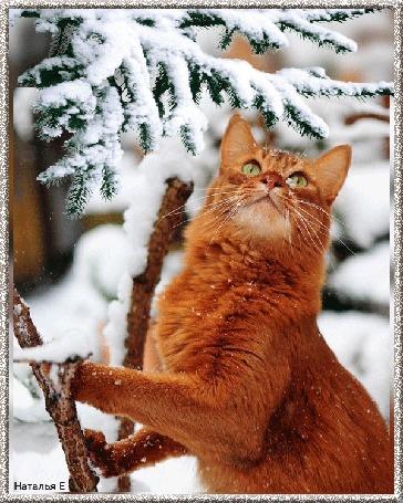 Анимация Рыжий кот сидит под елкой и следит за летающей синицей
