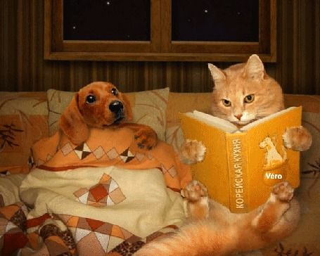 Анимация Рыжий кот и такса лежат в постели, кот читает таксе книгу (Корейская кухня)