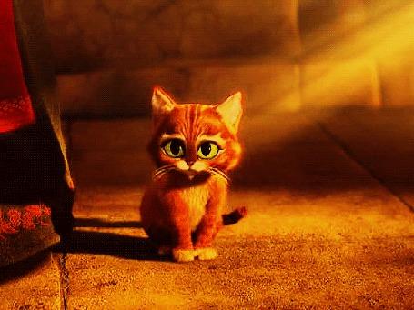 Анимация Рыжий котик с зелеными глазами сидит на полу