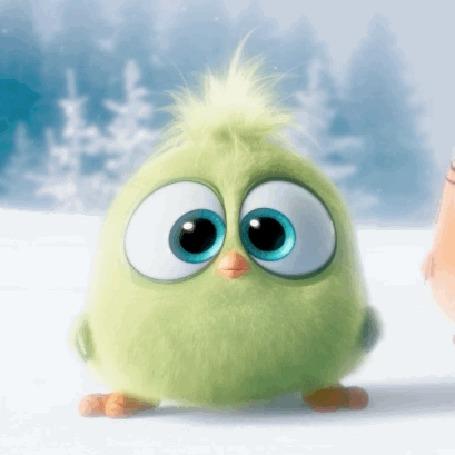 Анимация Зеленый птенец высовывает язык и машет крыльями, мультфильм Angry Birds / Энгри Бердс / Злые птицы