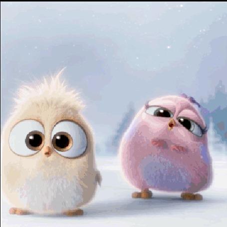 Анимация Три пушистых птенца, один из которых облизывает экран, мультфильм Angry Birds / Энгри Бердс / Злые птицы