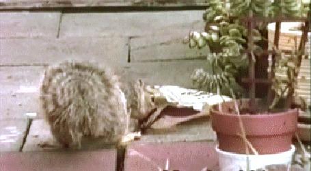 Анимация Белка пытается достать что - то вкусное из пакета, но у нее это не получается